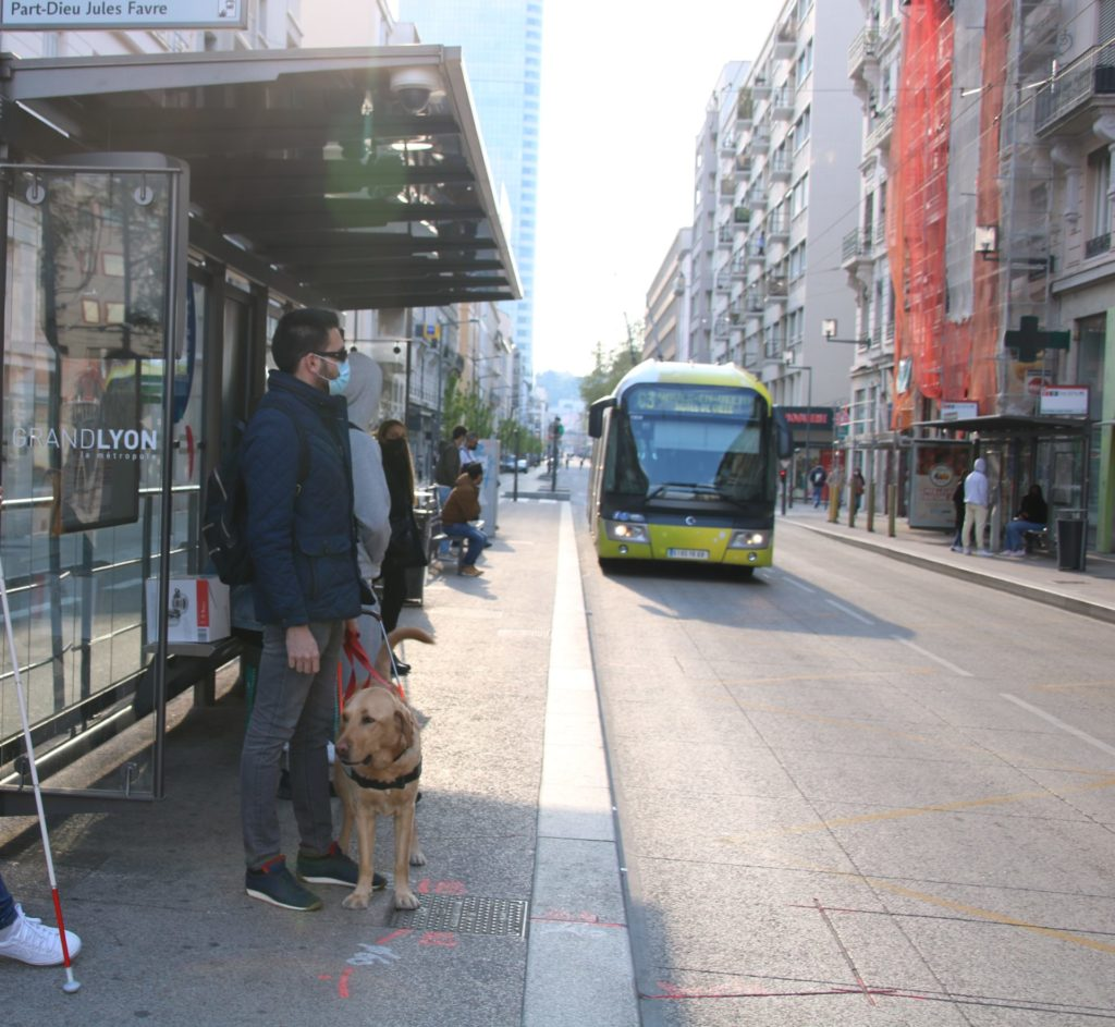 Maitre chien guide attend bus